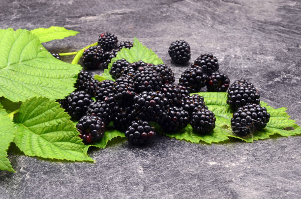 BlackBerry on black background BlackBerry on black background close up photo antipyretic stock pictures, royalty-free photos & images