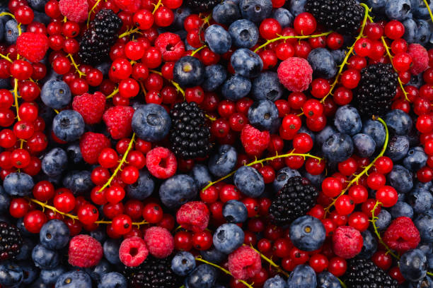 Blackberry, raspberry, blueberry,  red currant and mint background. Blackberry, raspberry, blueberry,  red currant and mint background. berry stock pictures, royalty-free photos & images