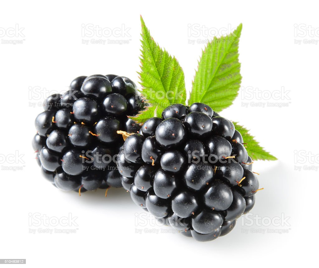 Blackberry with leaf isolated on white. stock photo