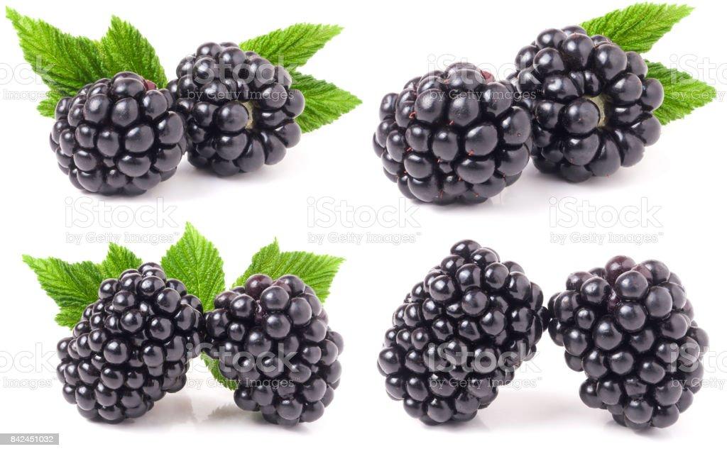 Blackberry com folhas isolado no fundo branco. Conjunto ou coleção - foto de acervo