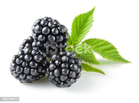 istock Blackberry with leaves isolated on white. 500799412