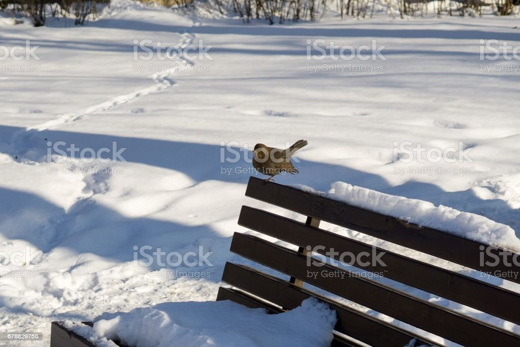 Blackbird ont he bench. photo libre de droits