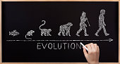 Concept about the evolution - from fish to human.