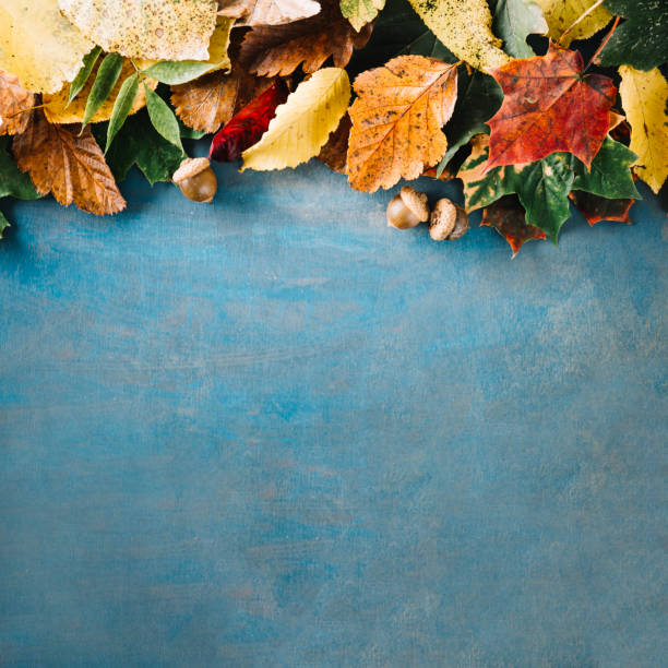 blackboard with arrangement of leaves - september stock photos and pictures