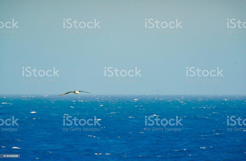 Black-browed Albatross über tiefblaue Wellen gleiten – Foto