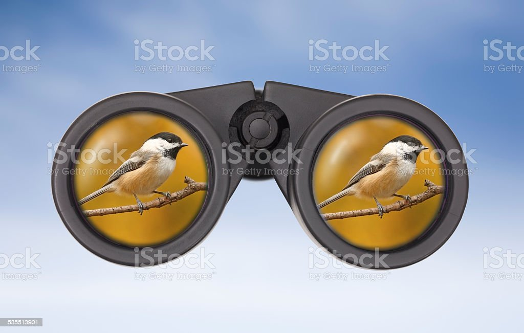 Black-capped Chickadee reflected in Binocular Lens. stock photo