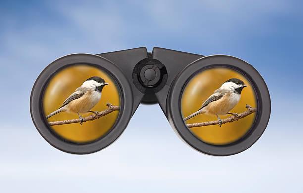 Black-capped Chickadee reflected in Binocular Lens. stock photo