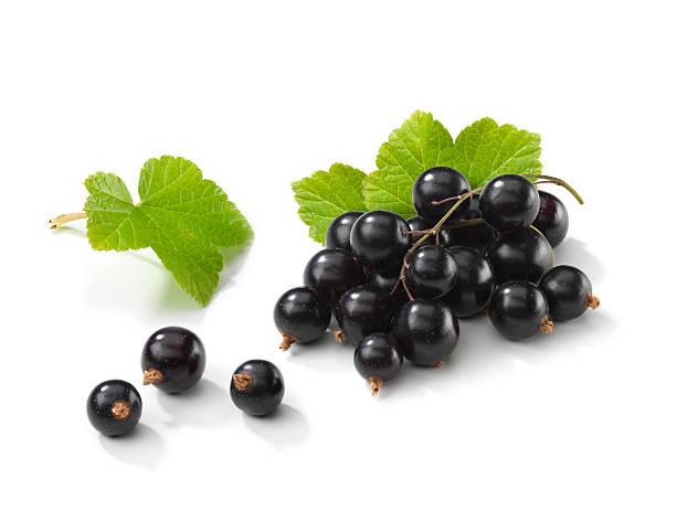 blackcurrant bunch with leafs - foderblad bildbanksfoton och bilder