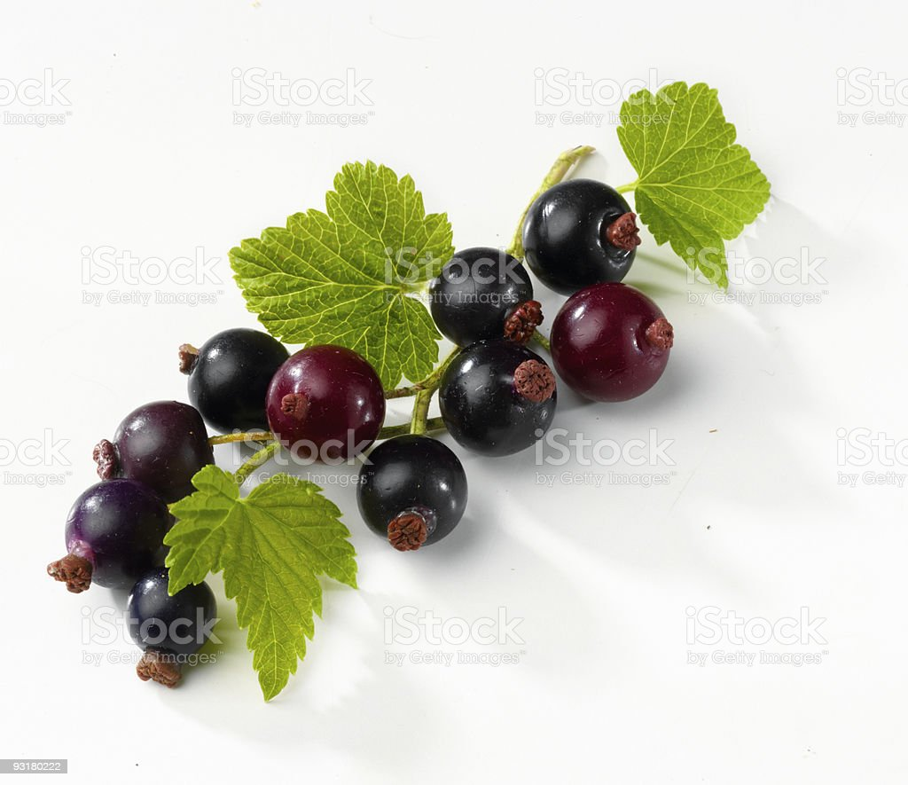 Blackcurrants and leaves stock photo