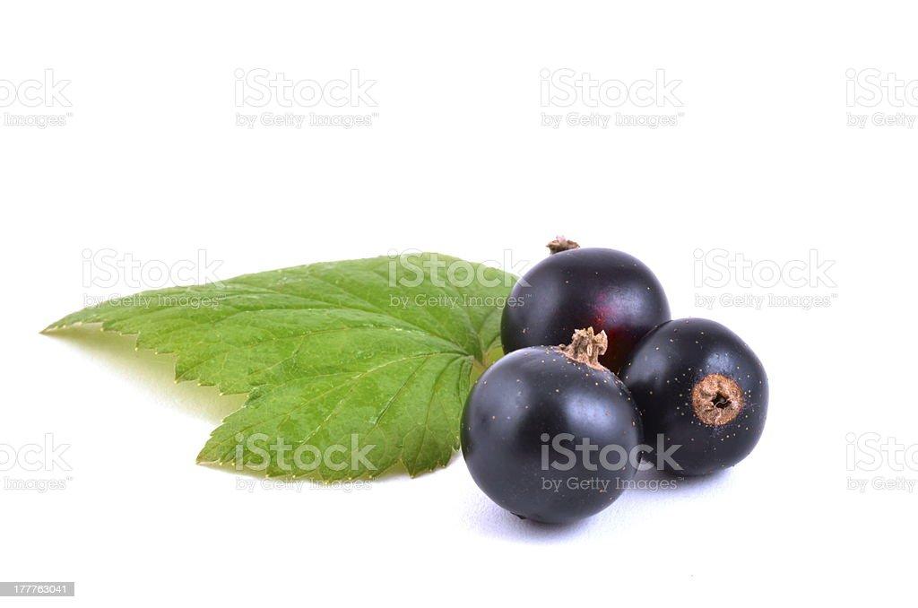 Blackcurrants close up on white background stock photo
