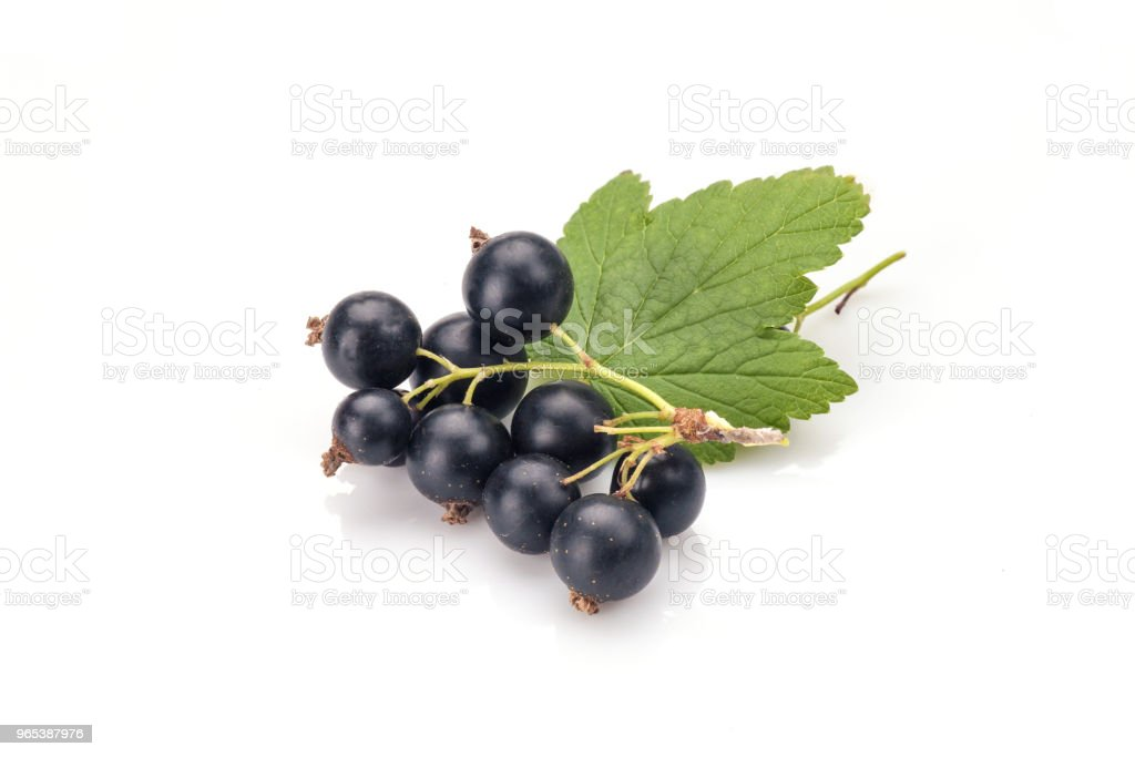 Blackcurrants zbiór zdjęć royalty-free
