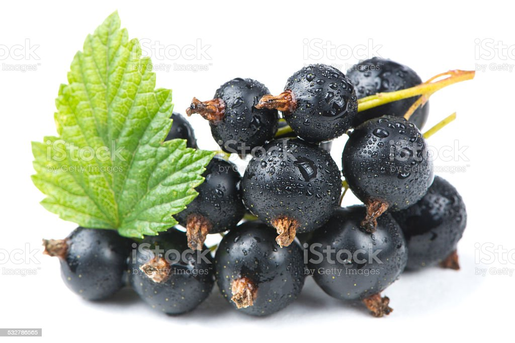 Blackcurrants with Green Leaf Isolated on White Background stock photo