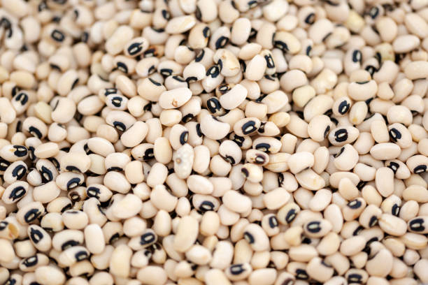 Black-eyed pea know as black california pea or goat peat (Vigna unguiculata). stock photo