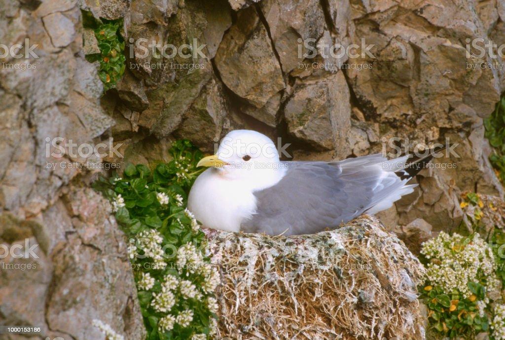 Tridáctila no ninho - foto de acervo