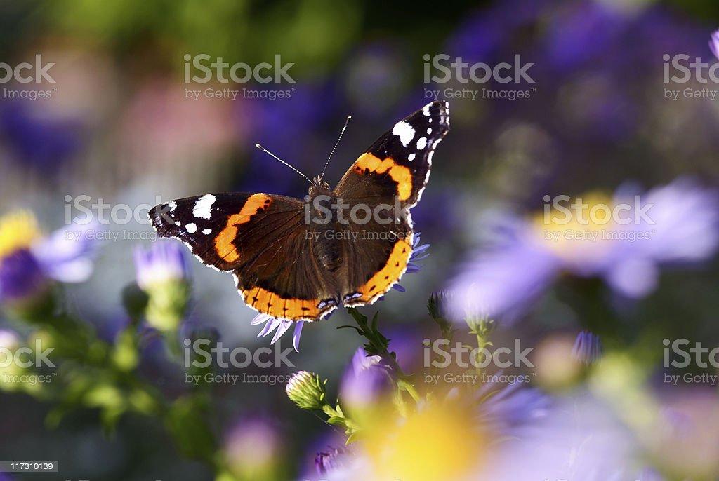 black-orange butterfly stock photo