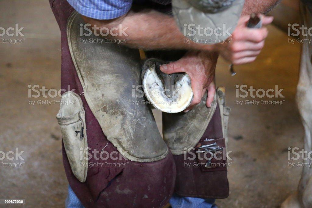 Blacksmith trimming horse hooves on farm stock photo