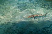 Manta Ray underwater on coral reef in ocean