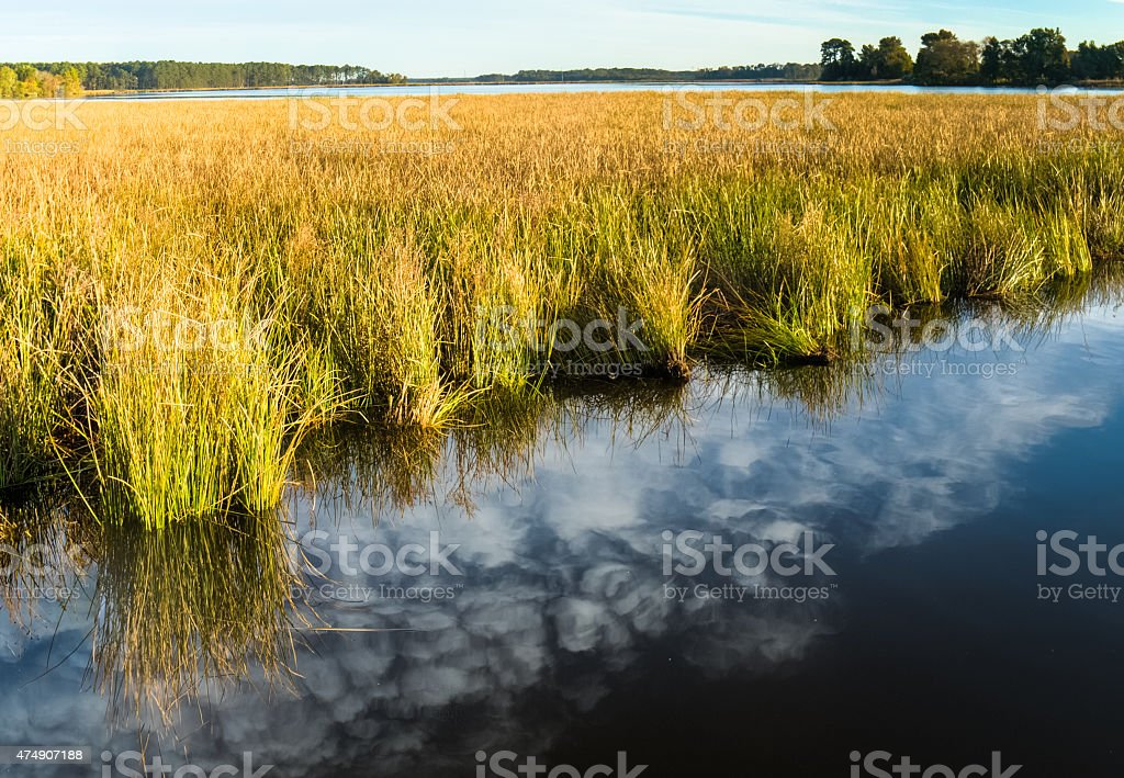 Blackwater National Wildlife Marsh Grass and Reflection stock photo