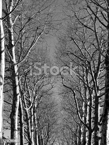 istock blackwhite tree 179086407