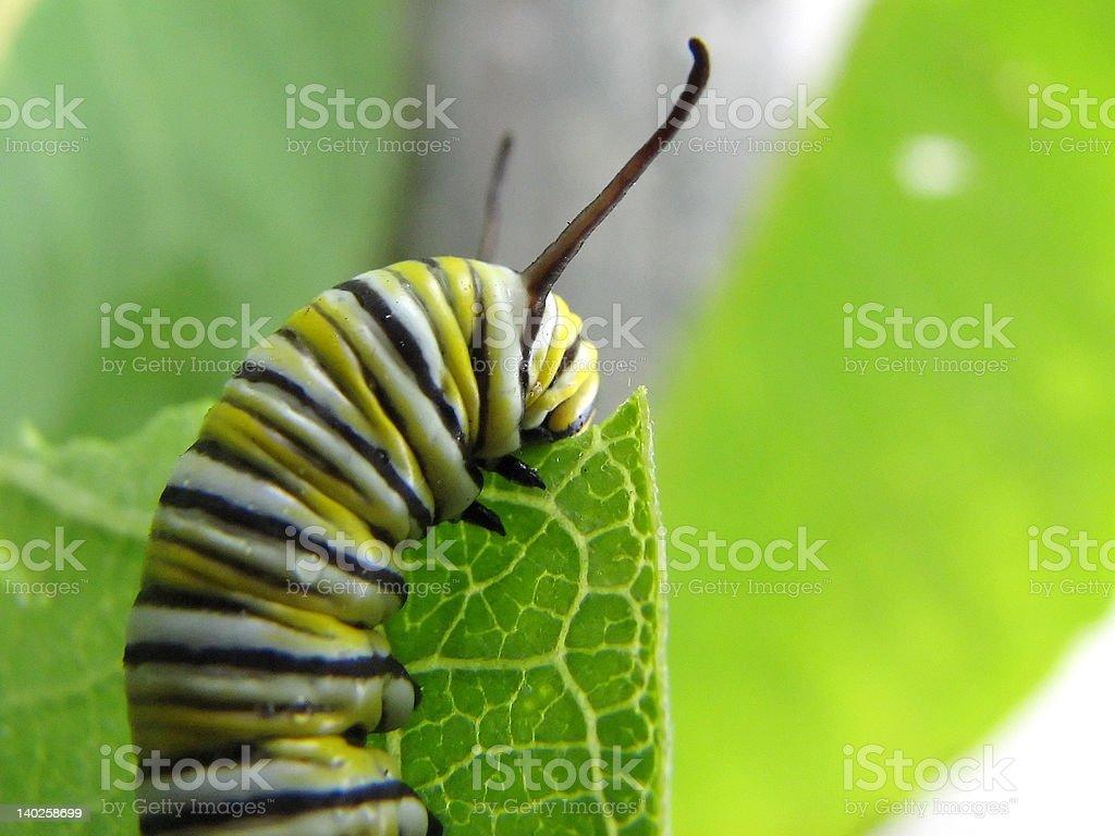 Black&Yellow Caterpillar2 stock photo