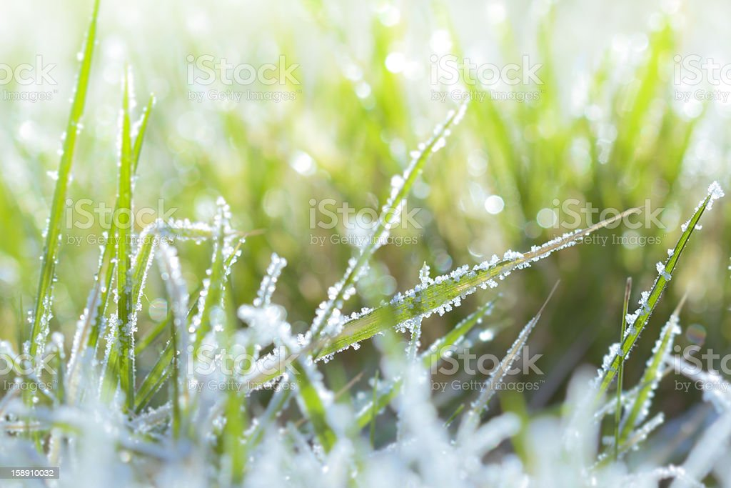 Blade of grass covered in frost. stock photo