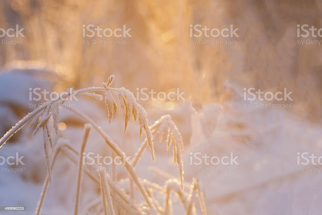 Blade of grass in the evening sun stock photo
