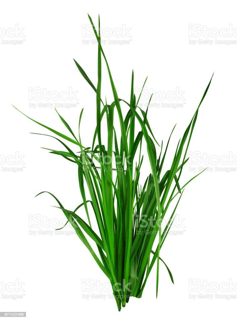 Brizna de hierba aislado sobre blanco - foto de stock