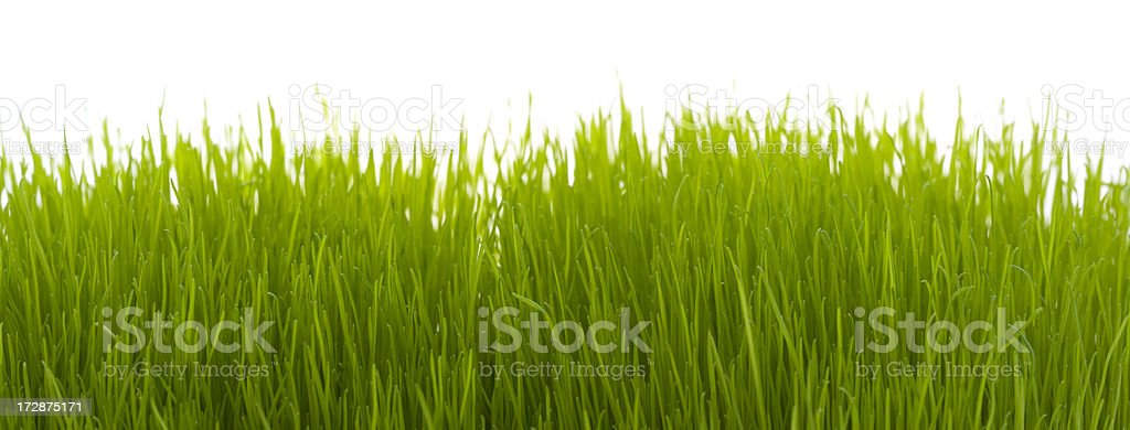 Blade of grass (XXL) royalty-free stock photo
