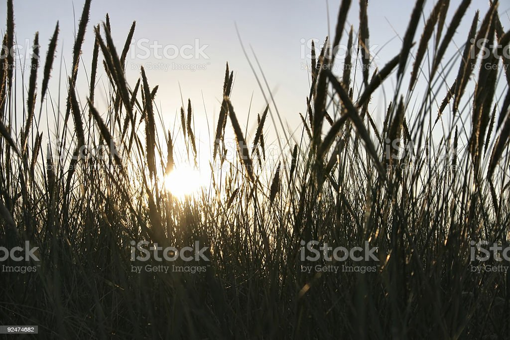 blades against the sun #2 royalty-free stock photo