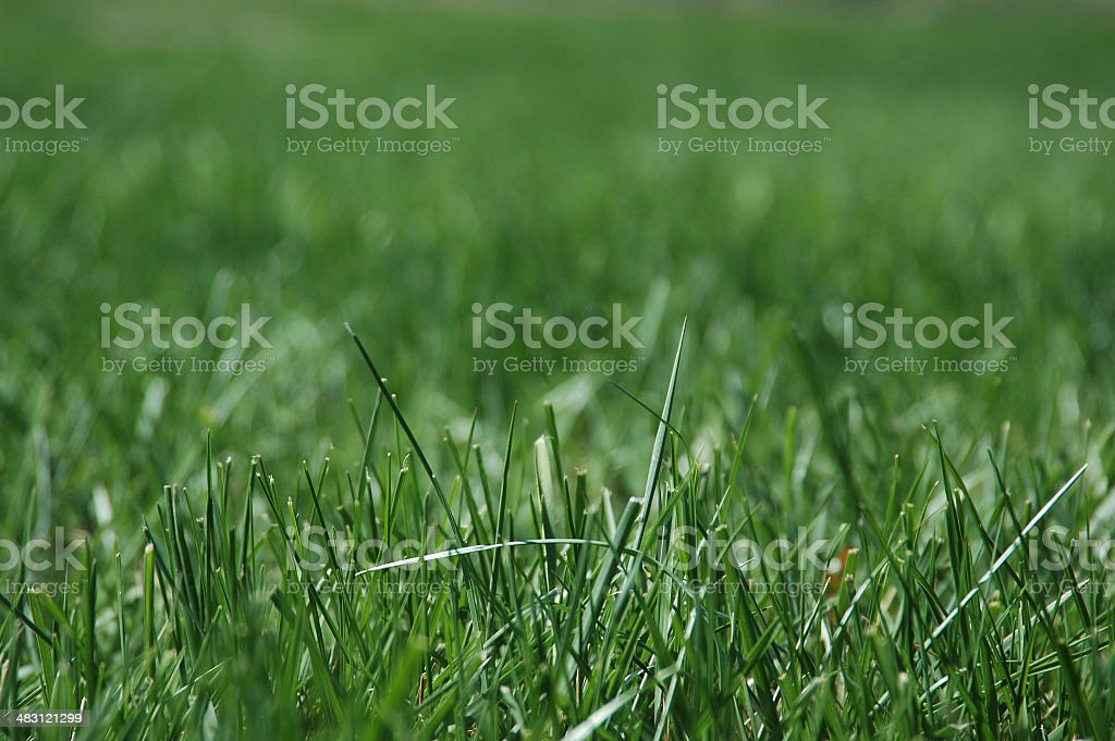 blades of grass 1 royalty-free stock photo