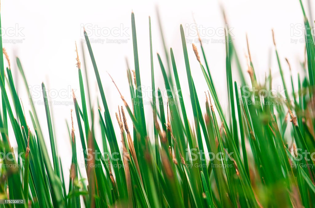 blades of grass close up abstract royalty-free stock photo