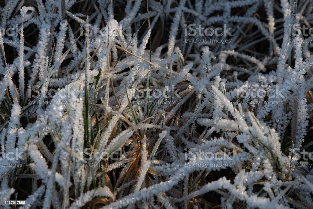 Grasflächen, die mit Eiskristallen bedeckt sind, die von der Sonne beleuchtet werden – Foto