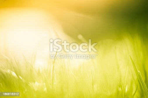 istock Blades of grass in the field. 186818312