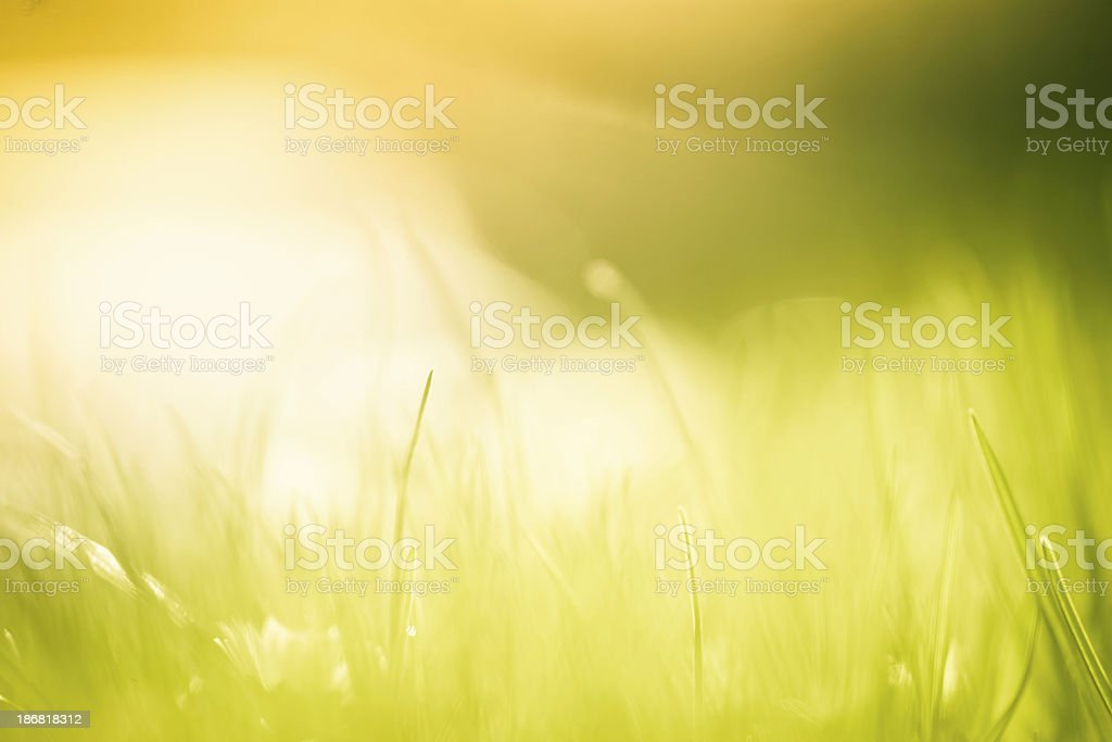 Blades of grass in the field. stock photo