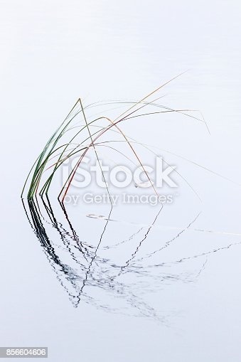 istock Blades of grass in the water with reflections 856604606