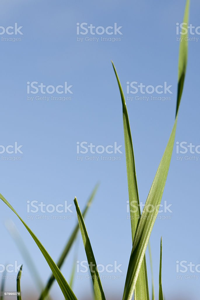 Blades Of Grass royalty free stockfoto