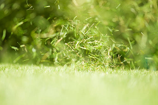Blades of grass, whirling in the wind stock photo