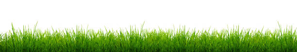 lâminas de verde grama isolado em um fundo branco. - gramado terra cultivada - fotografias e filmes do acervo