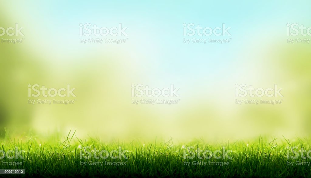 Blades of Green Grass with a blurred sky blue and green garden foliage background. stock photo