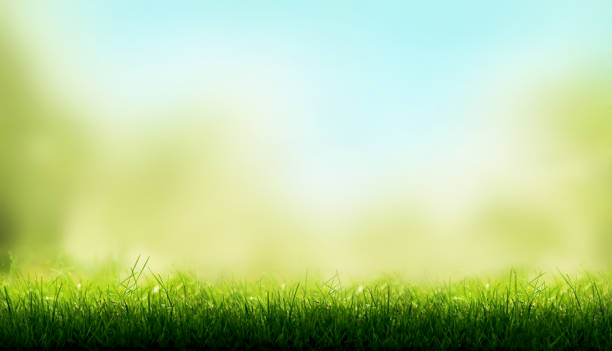blades of green grass with a blurred sky blue and green garden foliage background. - grass stock pictures, royalty-free photos & images