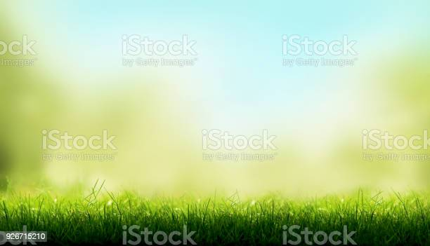 Photo of Blades of Green Grass with a blurred sky blue and green garden foliage background.