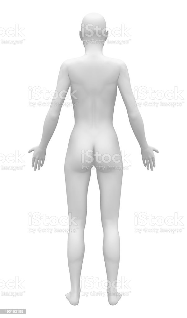 Blank Anatomy Female Figure Back View Stock Photo & More Pictures of ...