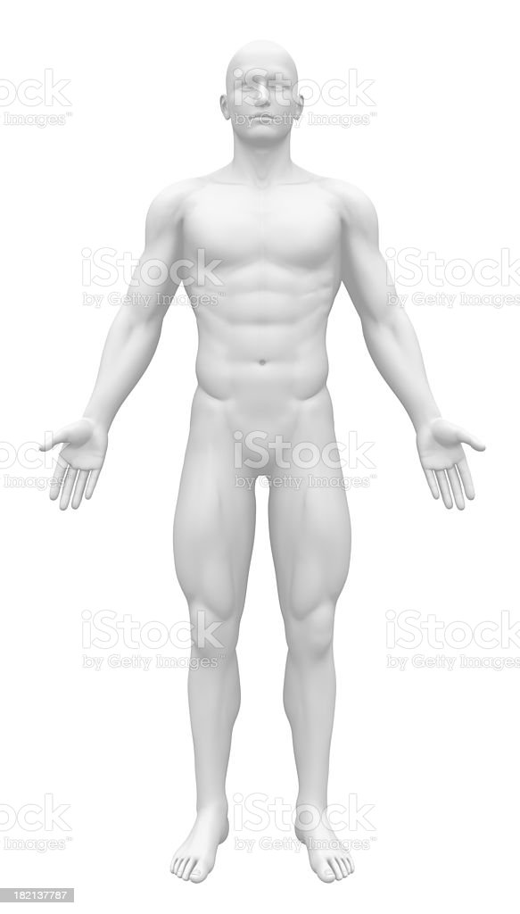 Blank Anatomy Figure - Front view stock photo