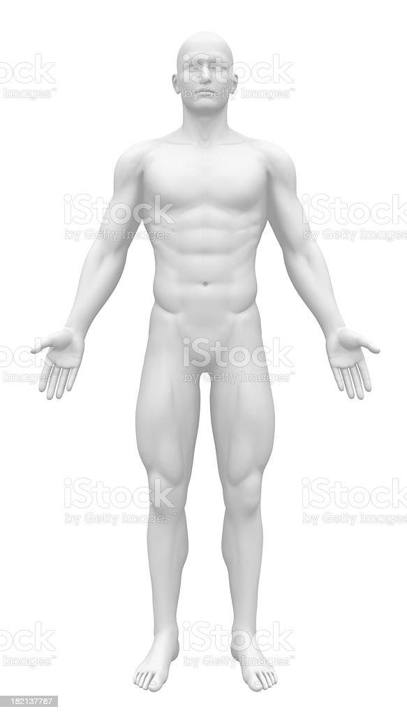 Leere Anatomie Abbildung-Vorderansicht – Foto