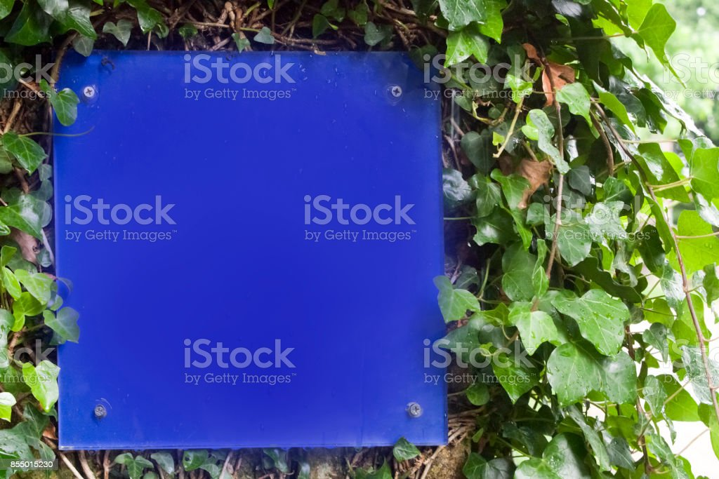 Blank blue square shaped sign on ivy covered wall. stock photo