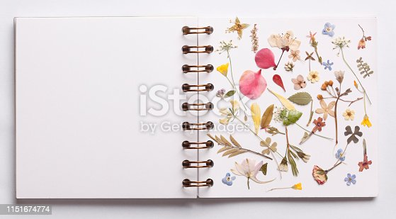 Blank white book page with botany decoration