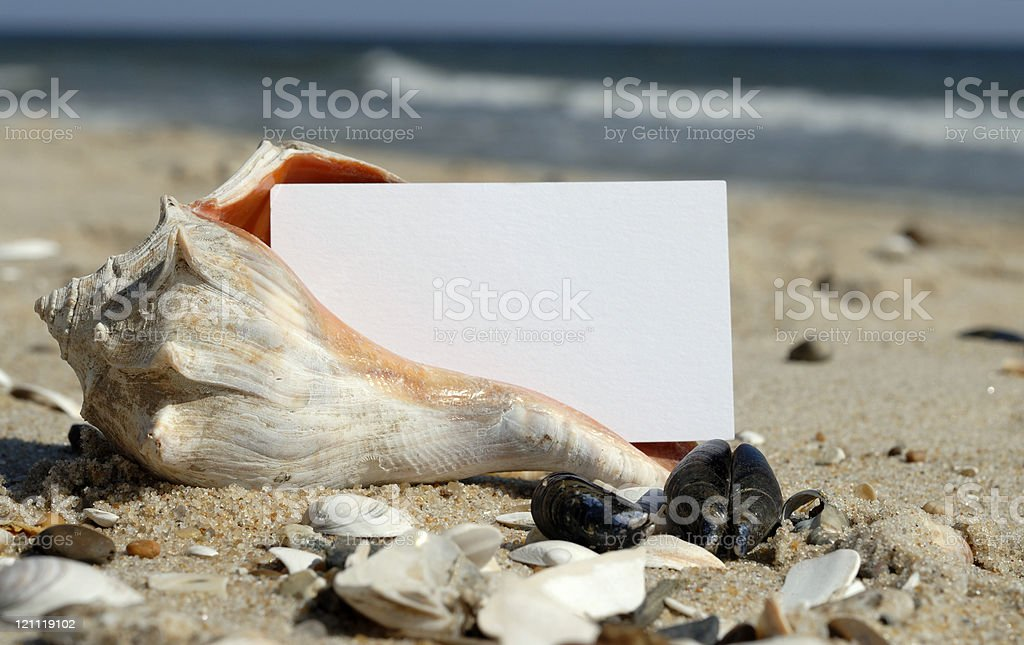 Blank Card in a Shell stock photo
