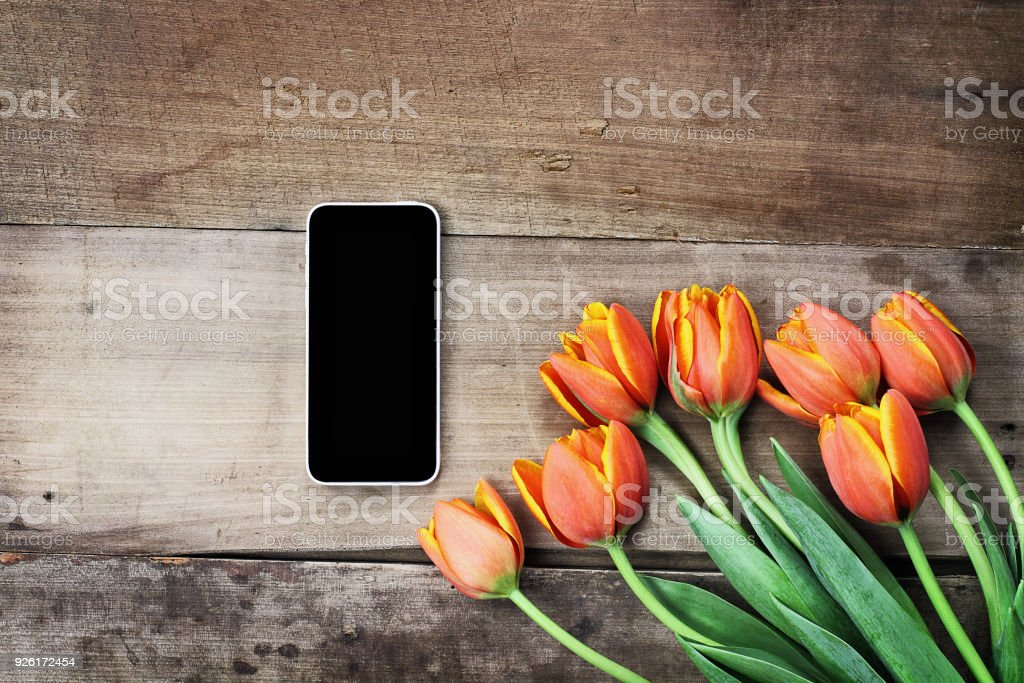 Blank Cell Phone and Tulips stock photo