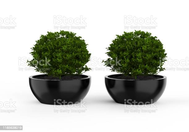Blank ceramic plant pot mock up on isolated white background 3d picture id1185638019?b=1&k=6&m=1185638019&s=612x612&h=mj5vqv79tynprfywv6h15on72n3ae4cejt7o5oxbakq=