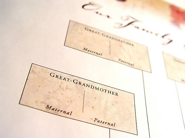 blank family tree 2 - 族譜 個照片及圖片檔